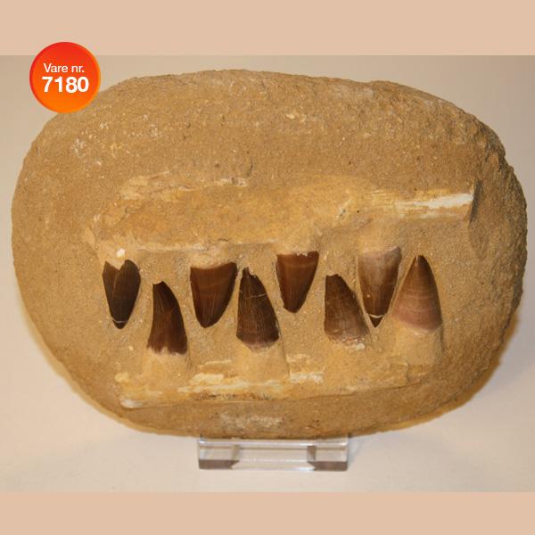 Fossiler   Brazil Art